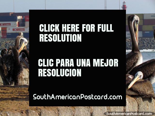 Pelicanos e containeres no porto em Iquique. (640x480px). Chile, América do Sul.