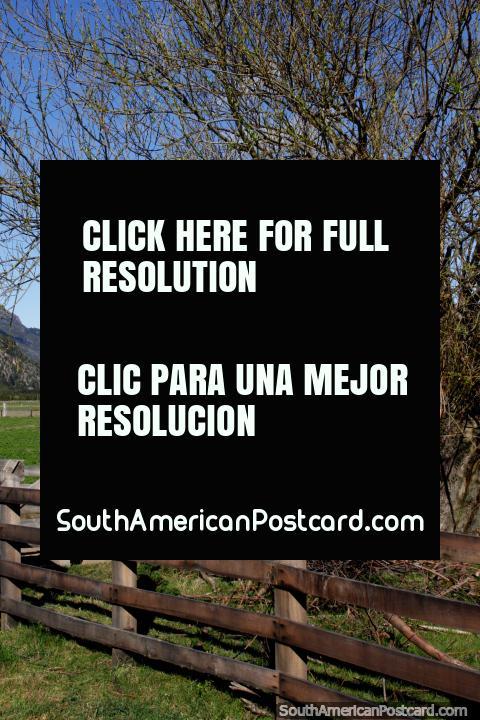 Campos verdes y montañas nevadas distantes en el campo alrededor de Futaleufú. (480x720px). Chile, Sudamerica.