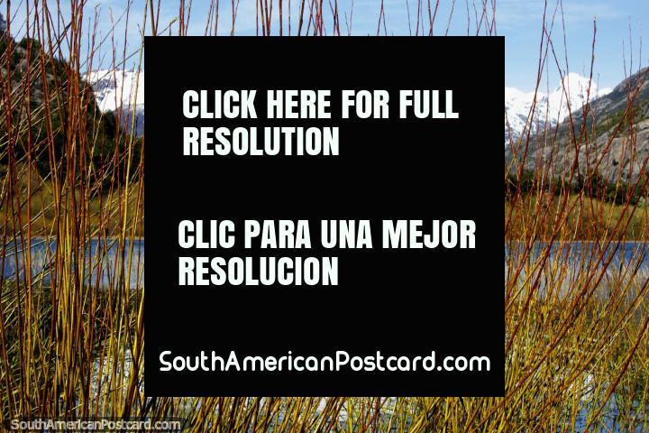 Reeds create a curtain in front of Laguna Espejo (Mirror Lagoon) in Futaleufu. (720x480px). Chile, South America.