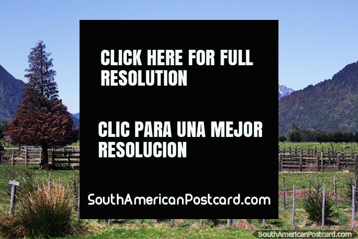 Ranch and farmland in the area around La Junta between Futaleufu and Coyhaique. (720x480px). Chile, South America.