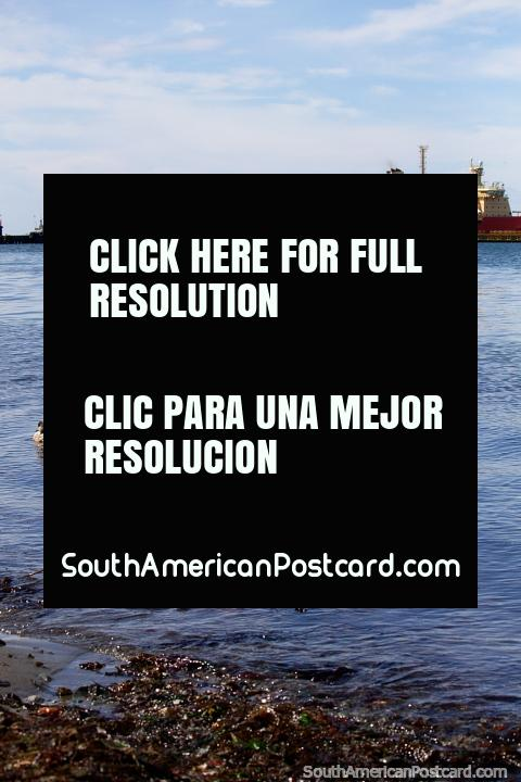 Ducks in the water and the distant port in Punta Arenas. (480x720px). Chile, South America.