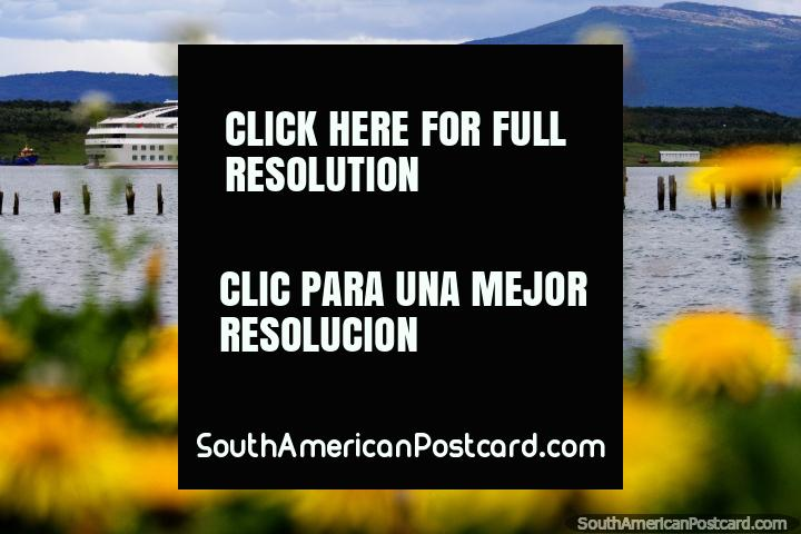 Puerto Natales, a cruise ship, the old pier and yellow flowers. (720x480px). Chile, South America.