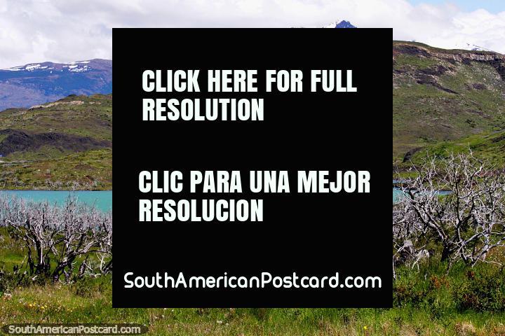 El Lago Pehoe aparece a la vista, ramas de árboles muertos y colinas distantes en Torres del Paine. (720x480px). Chile, Sudamerica.