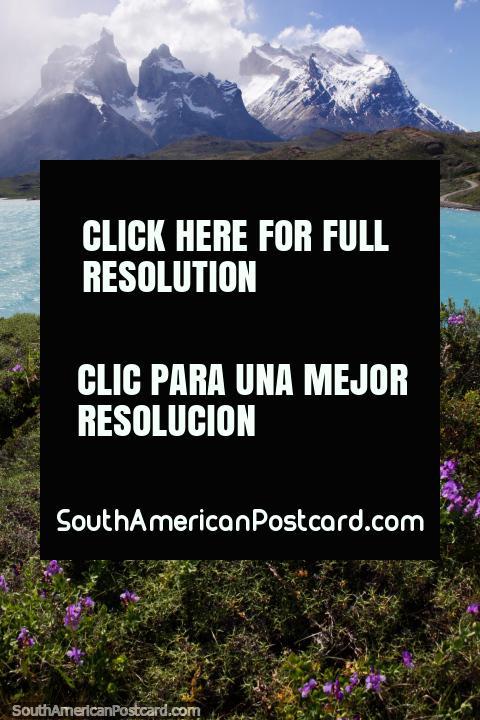Flores de color púrpura, el lago y las montañas nevadas en el Parque Nacional Torres del Paine. (480x720px). Chile, Sudamerica.
