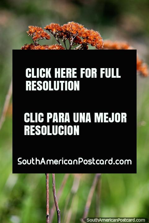 Tallos secos y flores en la hierba alrededor del Lago Pehoe en Torres del Paine. (480x720px). Chile, Sudamerica.