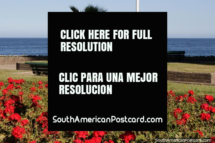 Red flower gardens in a nice green park beside the sea in Vina del Mar. (720x480px). Chile, South America.