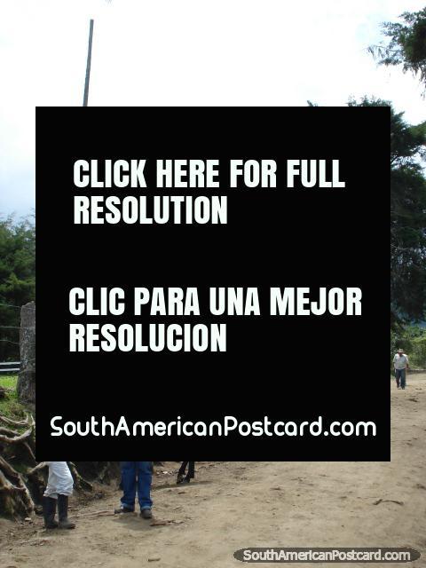 O caminho de sujeira onde pode alugar um cavalo em Vale de Cocora em Salento. (480x640px). Colômbia, América do Sul.