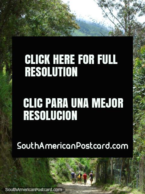 Puede andar la pista en el Valle de Cocora en Salento. (480x640px). Colombia, Sudamerica.