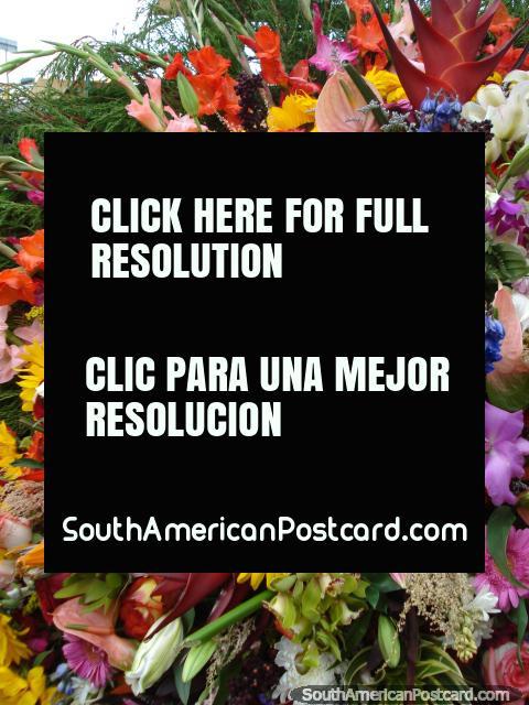Cores de magia, buquê de flor em Feira das Flores, Medellïn. (480x640px). Colômbia, América do Sul.
