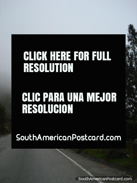 Uma breve visita na floresta de nuvem de Bucaramanga a Cucuta. (480x640px). Colômbia, América do Sul.