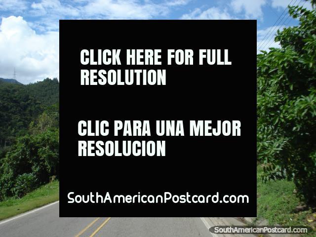 El planeo calle abajo hacia Cucuta a través del bosque. (640x480px). Colombia, Sudamerica.