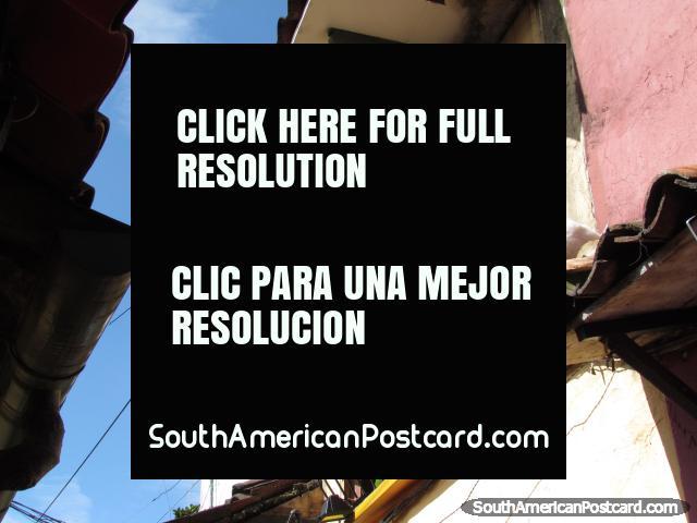 Gato listo para saltar de tejado a tejado en callejón de Bogotá. (640x480px). Colombia, Sudamerica.