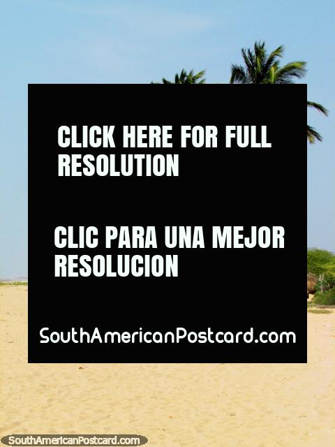 White sandy beach and palm trees at Camarones lagoon. (480x640px). Colombia, South America.
