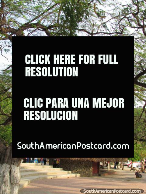 El parque al final de oriente lejano de Taganga con muchos árboles y espacio. (480x640px). Colombia, Sudamerica.
