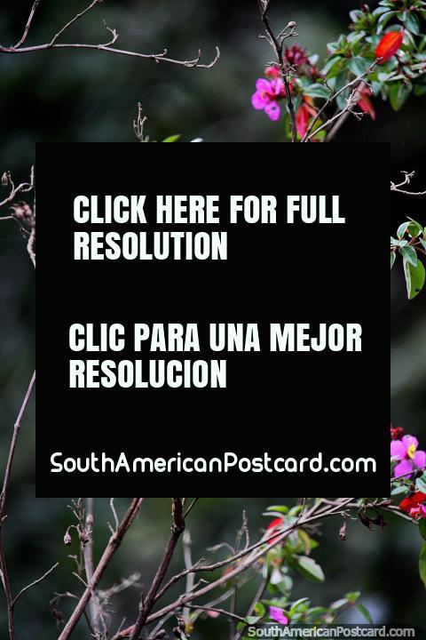 Coloridas hojas y flores cerca de Villa de Leyva - Santuario de Flora y Fauna Iguaque. (480x720px). Colombia, Sudamerica.