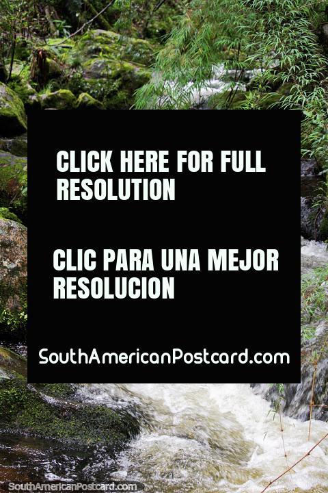 Las aguas de un río se mueven sobre las rocas en el Santuario de Flora y Fauna Iguaque, Villa de Leyva. (480x720px). Colombia, Sudamerica.