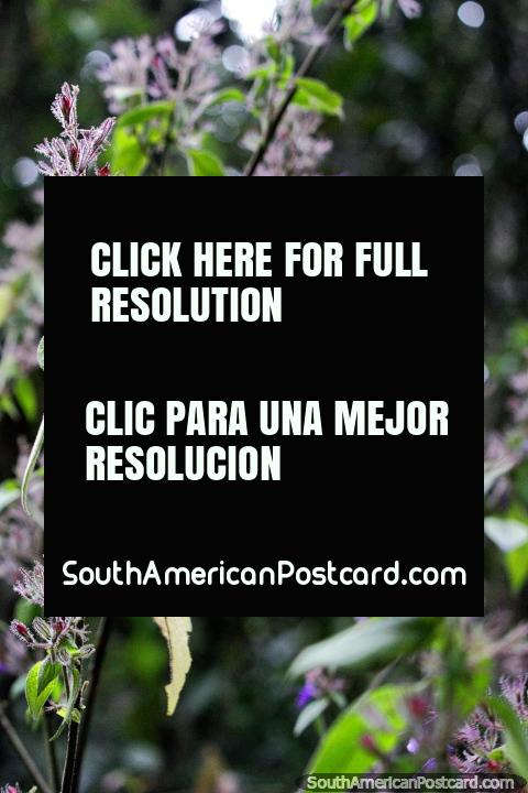 Belo passeio de natureza perto de Villa de Leyva no Santuário de Flora e Fauna Iguaque. (480x720px). Colômbia, América do Sul.
