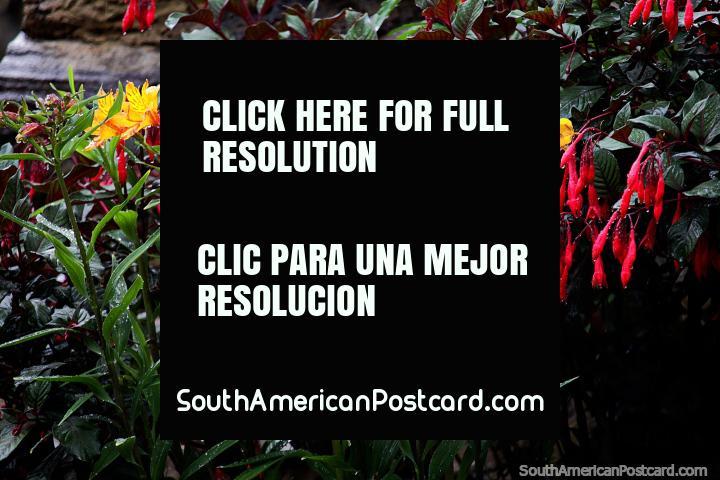 Tem muita bela flora no Santuário de Flora e Fauna Iguaque perto de Villa de Leyva. (720x480px). Colômbia, América do Sul.