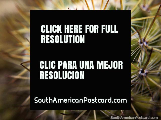 Foto macra de un cactus tomado en la Casa Terracota en Villa de Leyva. (640x480px). Colombia, Sudamerica.