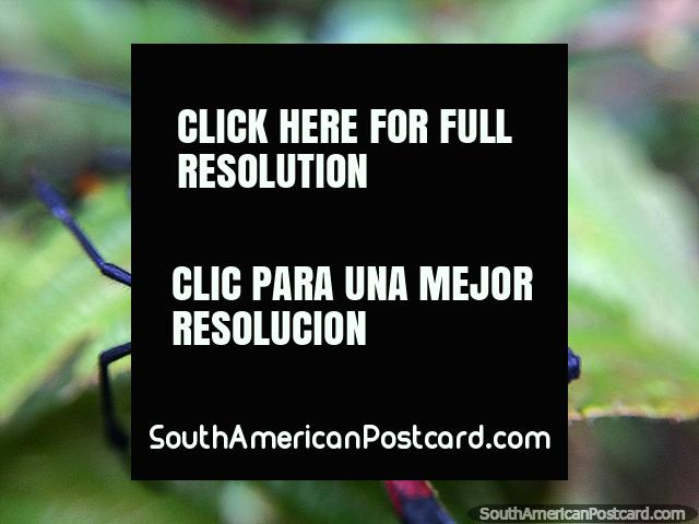 Exploring the Sanctuary of Flora and Fauna Iguaque for insects, Villa de Leyva. (640x480px). Colombia, South America.