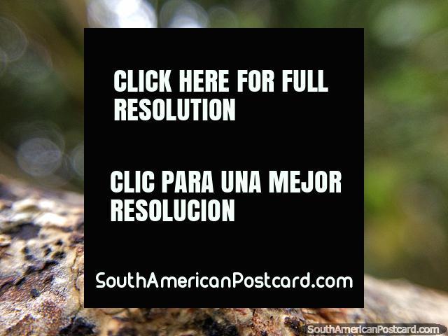 Detalles de la naturaleza son interesantes, foto macro, Santuario de Flora y Fauna Iguaque, Villa de Leyva. (640x480px). Colombia, Sudamerica.