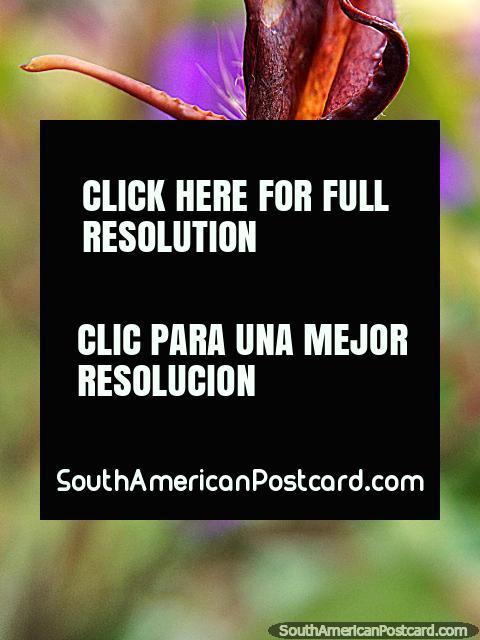 Aranha muito pequena, foto macro no Santuário de Flora e Fauna Iguaque, Villa de Leyva. (480x640px). Colômbia, América do Sul.