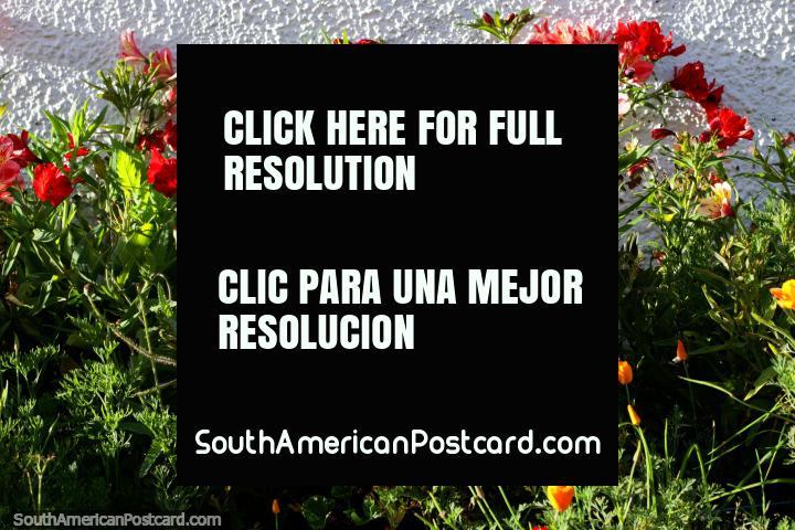 Jardim bonito de verde com flores brilhantes de vermelho e cor-de-laranja em Guatavita. (720x480px). Colômbia, América do Sul.