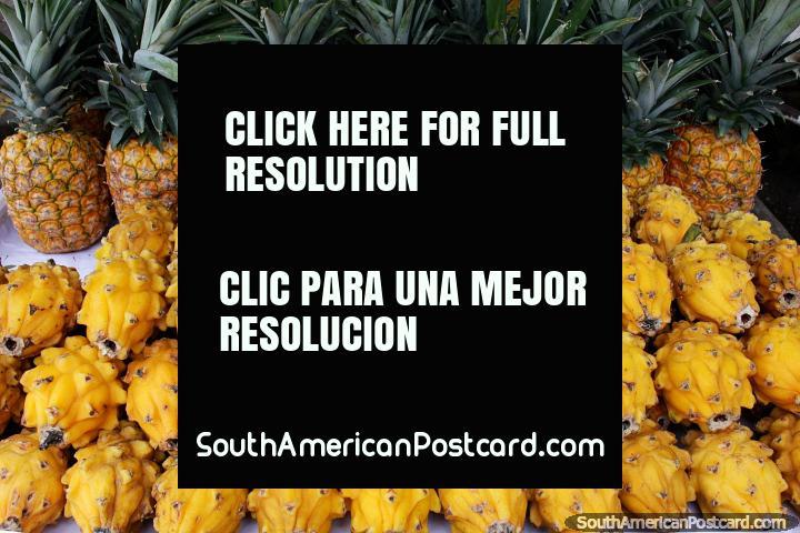 Pitaya (Fruto de Dragão), rico na fibra e ajuda a regular o sistema digestivo, fruto exótico em Girardot. (720x480px). Colômbia, América do Sul.