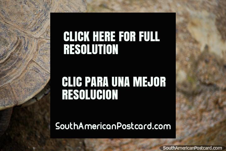 Olhos dianteiros e em forma de contas de uma tartaruga em Jardim zoológico de Cali. (720x480px). Colômbia, América do Sul.