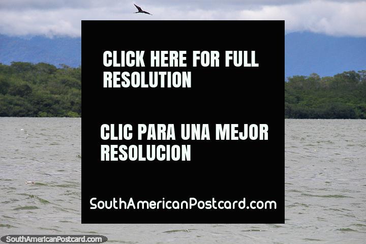 Grupo de pelícanos en el mar frente a la costa de Buenaventura (costa del Pacífico). (720x480px). Colombia, Sudamerica.