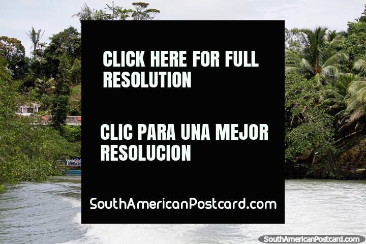 Apressando-se longe de hotel Maguipi, um lugar de recreação do mar e ecotourism em Buenaventura. (720x480px). Colômbia, América do Sul.