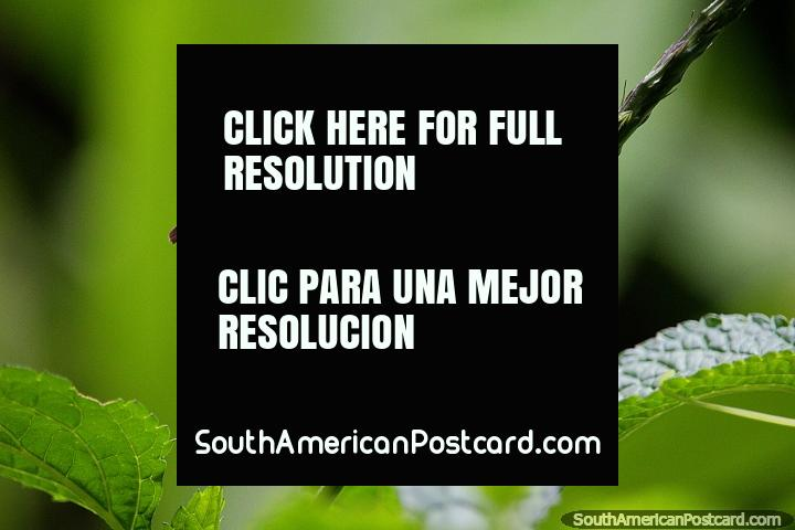 Mariposa sobre una flor morada, disfrutando de la naturaleza en la Reserva Natural de Observación de Aves Tinamu en Manizales. (720x480px). Colombia, Sudamerica.