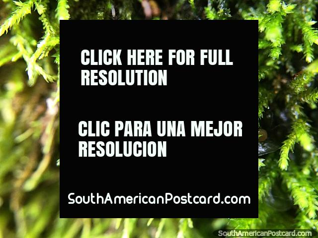 8 pernas igualam uma aranha gostando de casa verde, foto macro no jardim na Reserva de Natureza Tinamu em Manizales. (640x480px). Colômbia, América do Sul.