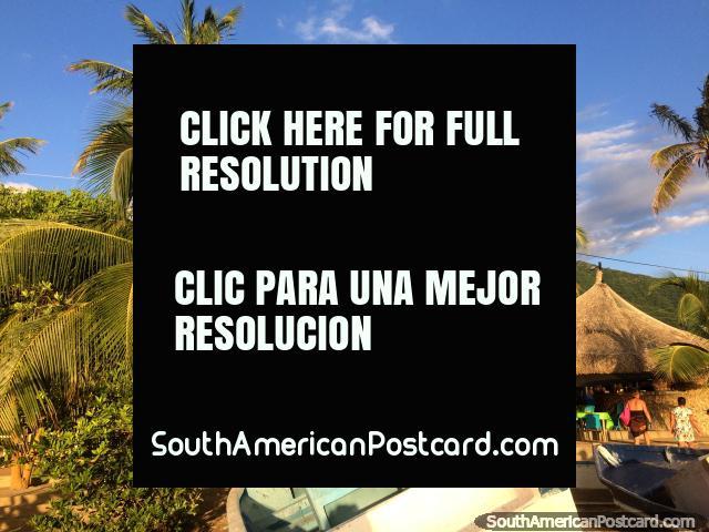 Hermosas palmeras se destacan alrededor de las cabañas del restaurante en Taganga. (640x480px). Colombia, Sudamerica.