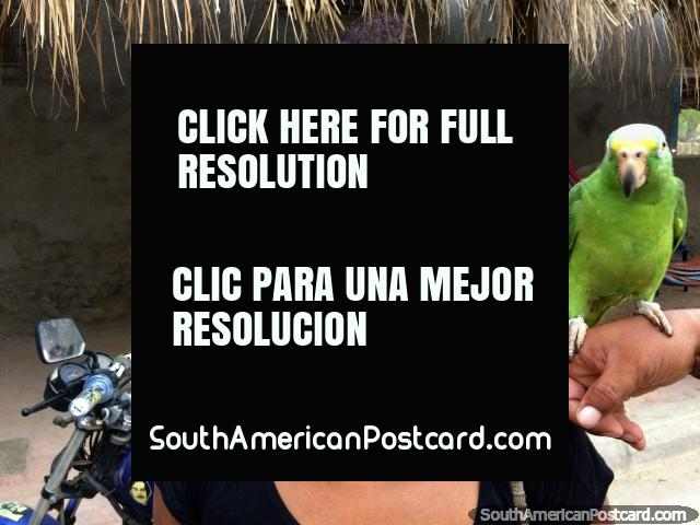 Woman with 2 pet parakeets in Taganga, all members happy for a photo. (640x480px). Colombia, South America.