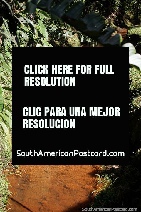 Desfrute da natureza enquanto caminha pelo Parque Arqueológico de San Agustin, um pequeno riacho. (480x720px). Colômbia, América do Sul.