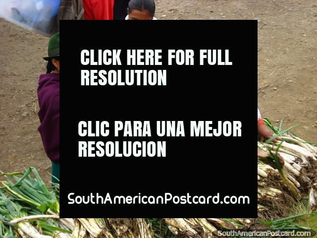 Spring onions freshly picked at Otavalo markets. (640x480px). Ecuador, South America.