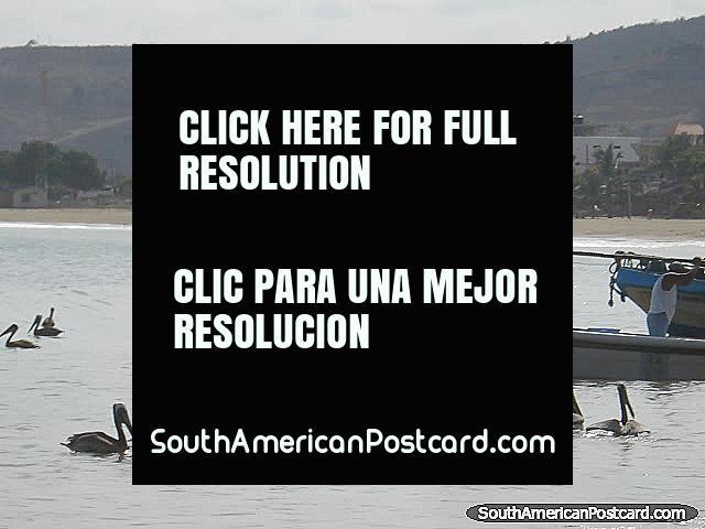 Pelicanos pelos barcos de pesca em Porto Lopez. (640x480px). Equador, América do Sul.