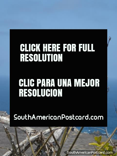 A Blue-Footed Booby on Isla de la Plata, picture 2. (480x640px). Ecuador, South America.