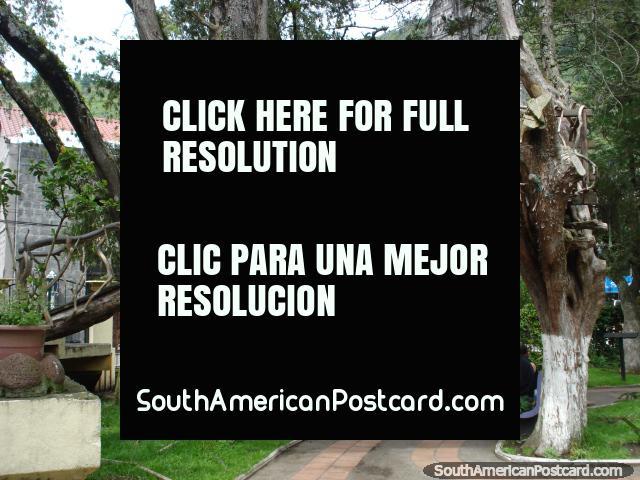Bridge in a tree at park Parque Palomino Flores in Banos. (640x480px). Ecuador, South America.