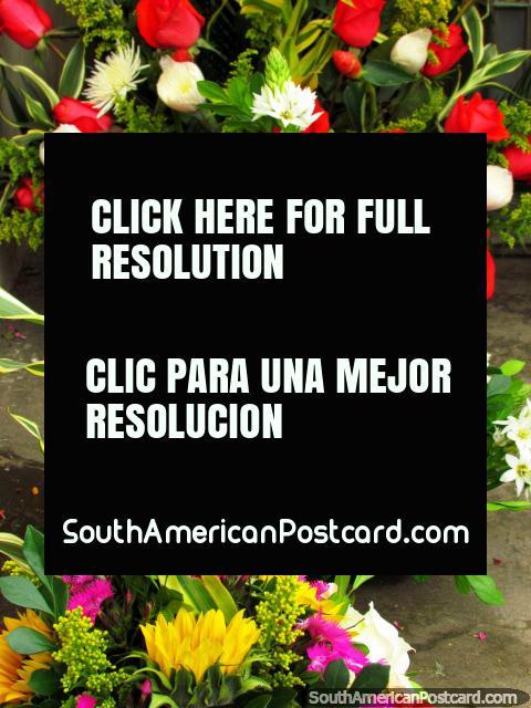 Flores cultivadas em Cayambe de venda nas ruas locais. (480x640px). Equador, América do Sul.