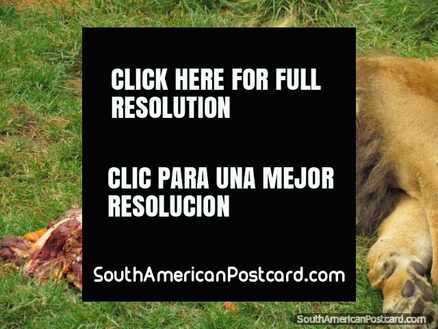 Quito Zoo in Guayllabamba, Ecuador - Zoo Animals & Fauna, 40mins From Quito. The Quito Zoo is located 40mins north of the city in Guayllabamba, come to see the animals, gardens, flora and fauna!