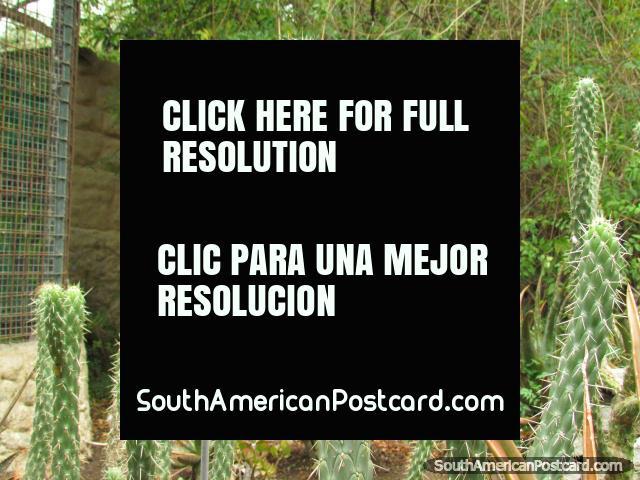 Cactus garden at Quito Zoo in Guayllabamba. (640x480px). Ecuador, South America.
