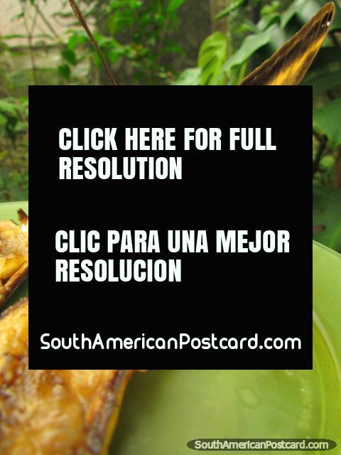 Butterflies enjoy eating bananas, Mariposario in Mindo. (480x640px). Ecuador, South America.