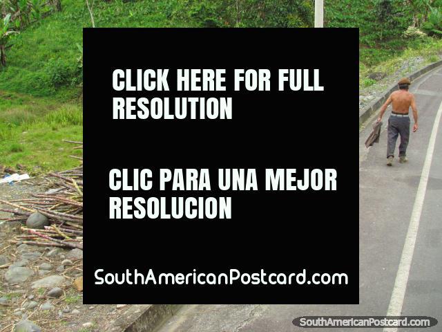 Sugarcane on roadside between Tena and Puyo. (640x480px). Ecuador, South America.