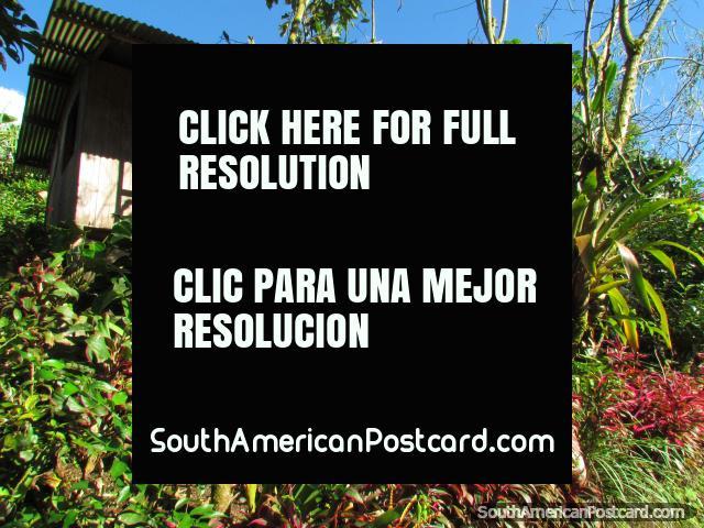 Bird park Parque Real de Aves Exoticas in Puyo. (640x480px). Ecuador, South America.