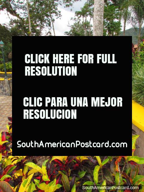 Leaf gardens and park beside the river in Zamora. (480x640px). Ecuador, South America.