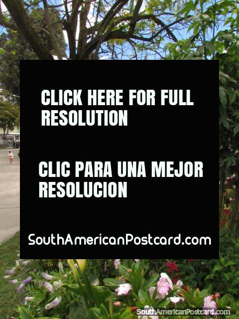 Beautiful park in Latacunga - Parque la Filantropia with trees and gardens. (480x640px). Ecuador, South America.
