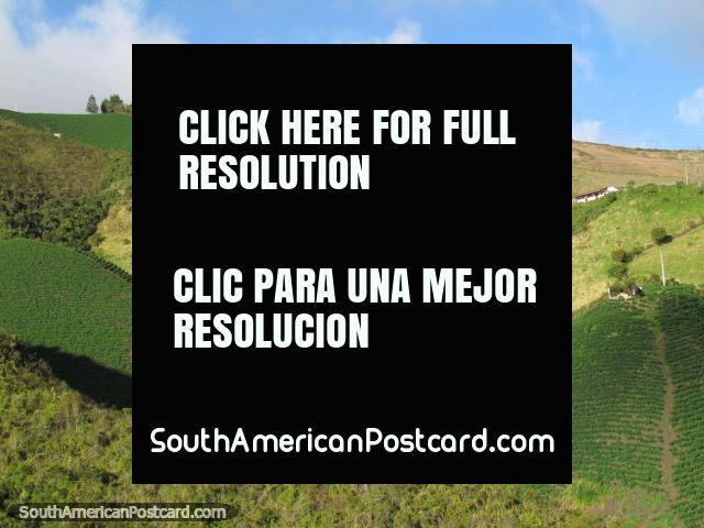 Green pastures and farmland south of Tulcan. (640x480px). Ecuador, South America.
