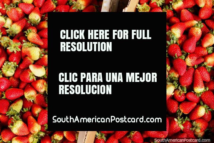 Fresh strawberries from the city of fresh fruit Ambato. (720x480px). Ecuador, South America.